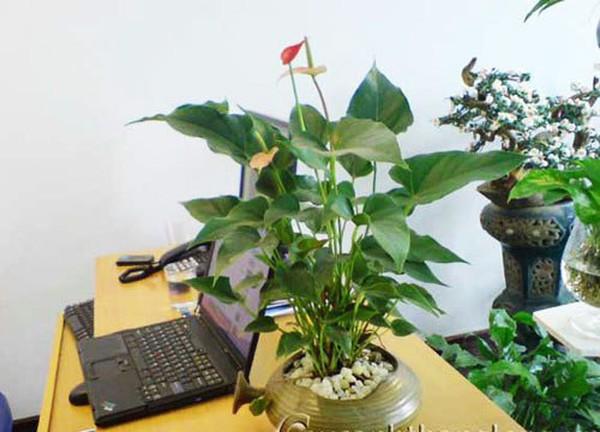 h Những loại cây cảnh dễ trồng và có tác dụng thanh lọc không khí trong nhà