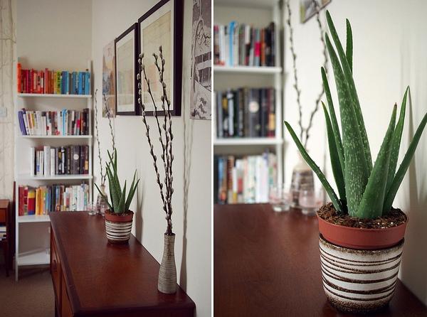 lo hoi Những loại cây cảnh dễ trồng và có tác dụng thanh lọc không khí trong nhà