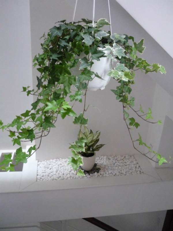thuong xuan Những loại cây cảnh dễ trồng và có tác dụng thanh lọc không khí trong nhà