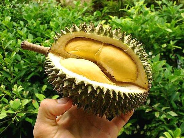 12 lý do chính đáng mà bạn nên ăn sầu riêng 2