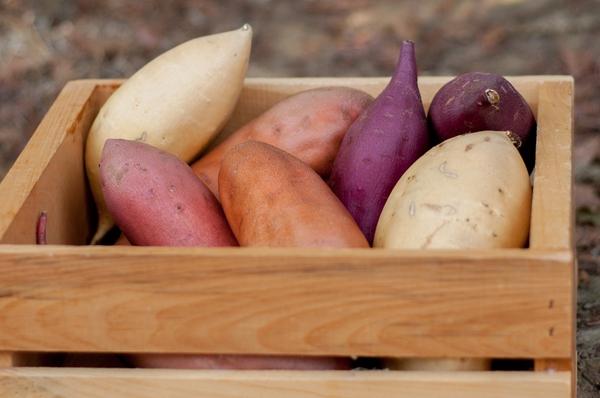 8 lý do chính đáng để bạn ăn khoai lang nhiều hơn 1