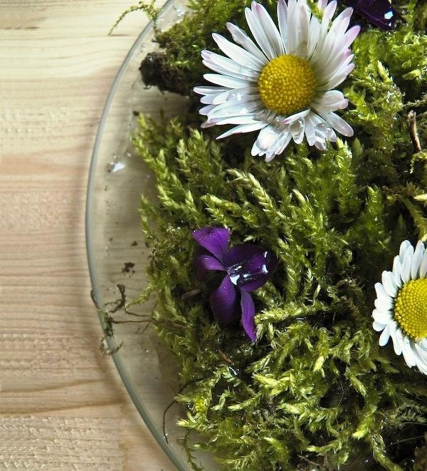 Cách cắm hoa cúc thanh nhã, tinh tế 6