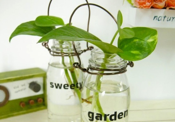 Bình trồng cây đẹp mắt từ chai lọ cũ 13