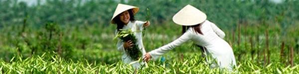 """""""Mò mẫm"""" những địa điểm chụp ảnh đẹp nhất vùng ven Sài Gòn 10"""
