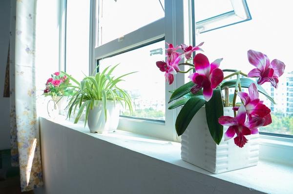 Ngắm căn hộ có góc vườn truyền cảm hứng cho cả khu chung cư ở Hà Nội 15