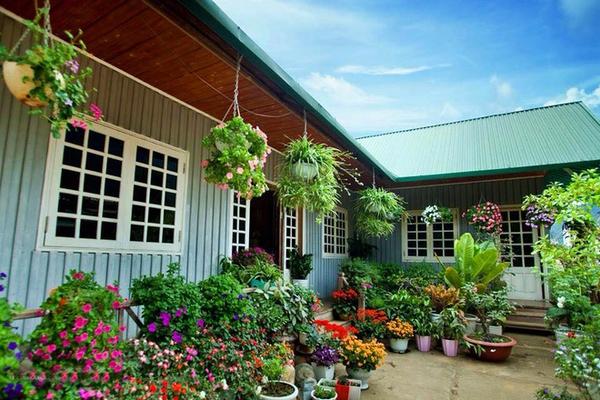 Mê mẩn ngôi nhà gỗ tràn ngập hoa trên cao nguyên đá Hà Giang 8