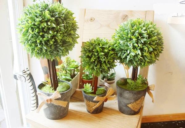 Góc làm việc thư thái hơn nhờ những chậu cây đẹp, dễ tìm mua 2