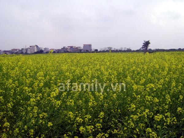 Đi chơi sớm ở 3 vườn hoa tuyệt đẹp tại Hà Nội 11