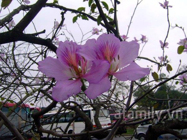 Đi chơi sớm ở 3 vườn hoa tuyệt đẹp tại Hà Nội 8
