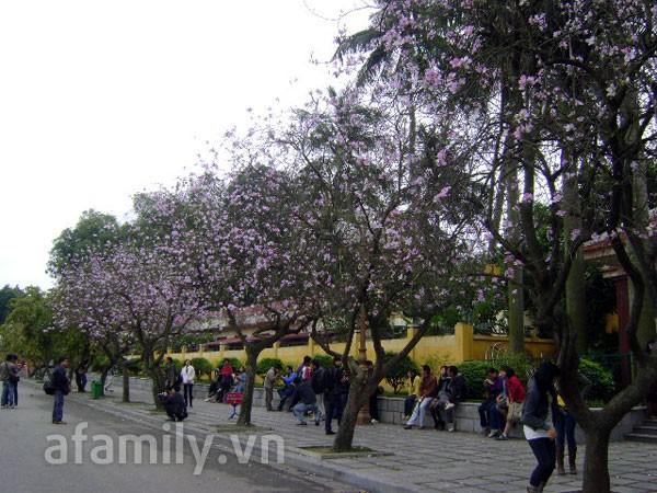 Đi chơi sớm ở 3 vườn hoa tuyệt đẹp tại Hà Nội 9