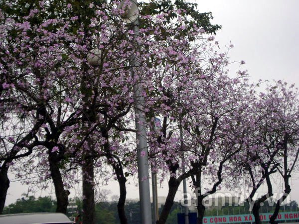 Đi chơi sớm ở 3 vườn hoa tuyệt đẹp tại Hà Nội 10