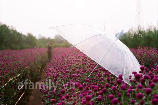 Đi chơi sớm ở 3 vườn hoa tuyệt đẹp tại Hà Nội 4