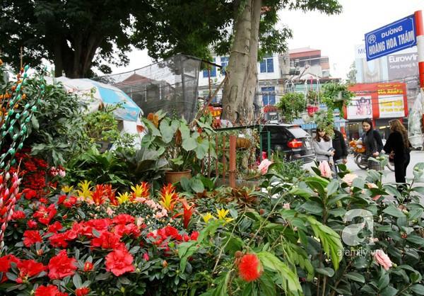 """Những """"thiên đường hoa"""" bậc nhất Việt Nam 5"""