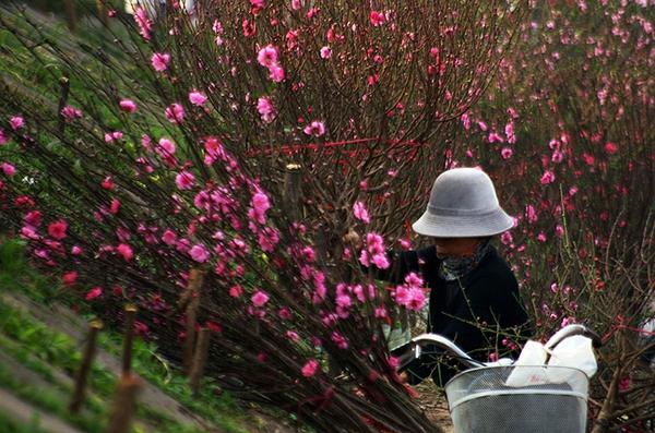 """Những """"thiên đường hoa"""" bậc nhất Việt Nam 6"""