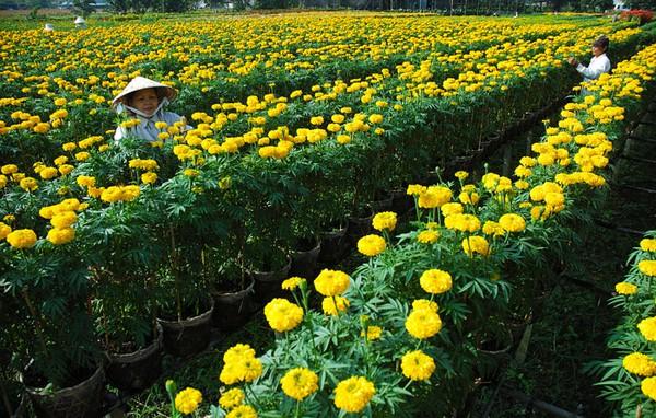 """Những """"thiên đường hoa"""" bậc nhất Việt Nam 18"""