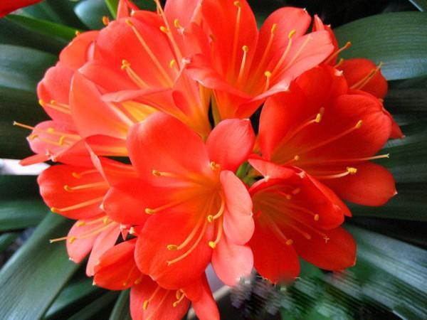 5 loại cây phong thủy nên có trong nhà vào dịp Tết 2013 8