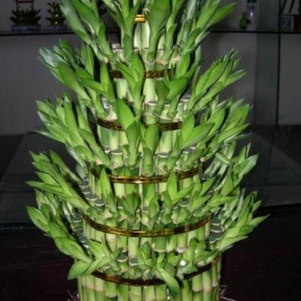 5 loại cây phong thủy nên có trong nhà vào dịp Tết 2013 2