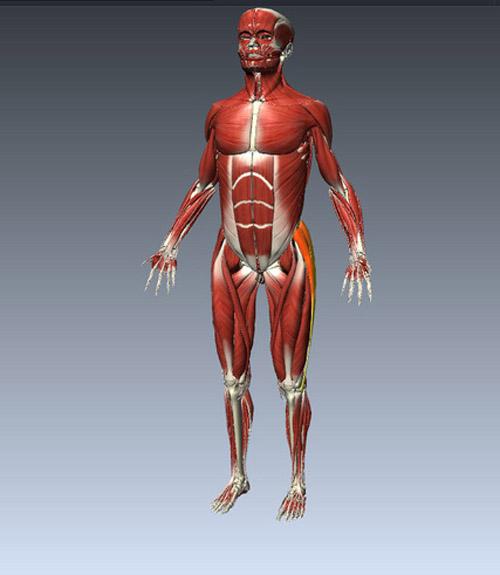 Tìm hiểu chức năng của các hệ thống bên trong cơ thể con người 2