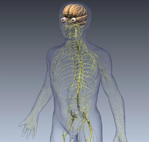 Tìm hiểu chức năng của các hệ thống bên trong cơ thể con người 3