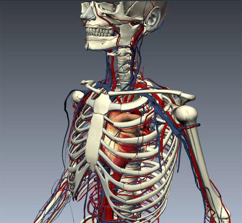 Tìm hiểu chức năng của các hệ thống bên trong cơ thể con người 4