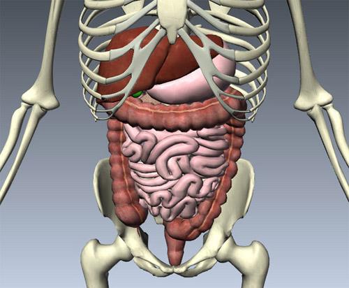 Tìm hiểu chức năng của các hệ thống bên trong cơ thể con người 5