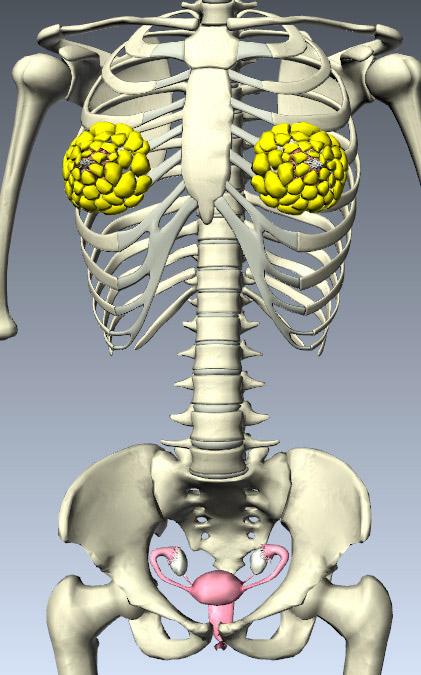Tìm hiểu chức năng của các hệ thống bên trong cơ thể con người 6