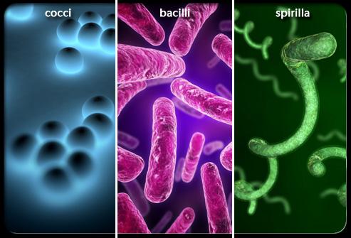 Một số bệnh nhiễm trùng phổ biến do vi khuẩn gây ra 2