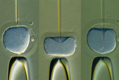 11 điều bạn cần biết về rụng trứng, thụ thai và mang thai 10