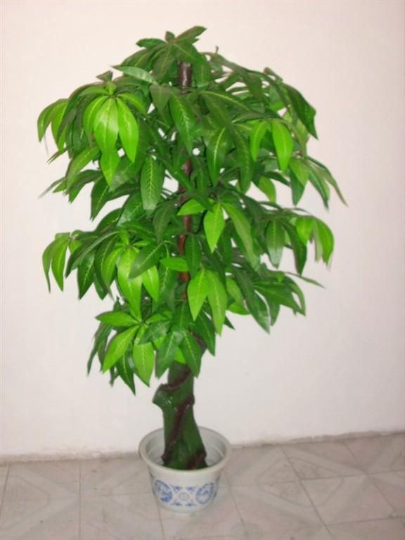 5 loại cây phong thủy nên có trong nhà vào dịp Tết 2013 10