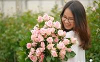 Hoa hồng Dalat Hasfarm: Những bông hoa từ trái tim