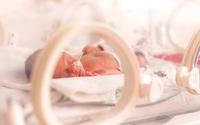 Phát minh mang tính đột phá: Tử cung nhân tạo giúp các bé sinh non có thêm cơ hội sống sót