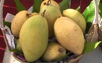 Chọn trái cây, cầm lên thấy thế này thì chắc mẩm là vừa chín tới, mua ngay kẻo lỡ