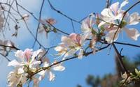 Loài hoa này không chỉ đẹp mà bạn hoàn toàn có thể tận dụng để chữa bệnh