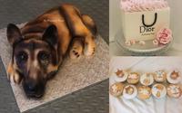 """Gặp chủ nhân của chiếc bánh """"chú chó 3D"""" thật và đẹp đến mức hút """"ngàn like"""" cộng đồng mạng xã hội"""