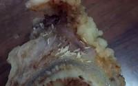 """Hà Nội: Khách phản ánh có """"vật lạ"""" trông như dòi trong bát bún, quán giải thích đó là mùn xương sụn"""