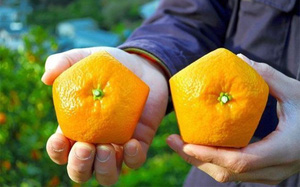 Quên dưa hấu vuông đi, Nhật Bản còn có loại cam ngũ giác thế này đây