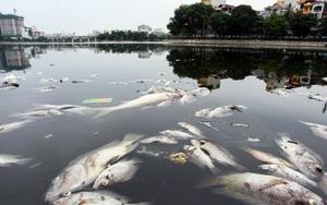 Hà Nội: Cá lại chết, nổi trắng mặt hồ Hoàng Cầu