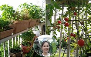Khu vườn Việt với đủ các loại rau quả sạch trên ban công vỏn vẹn 3m² tại Nhật