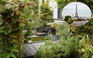 Khu vườn trên mái nhà ngập tràn cây trái với hướng nhìn thẳng ra tháp Eiffel