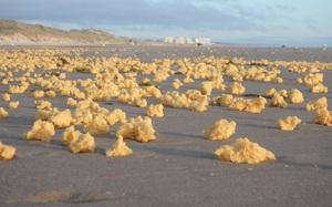 Bí ẩn hàng triệu vật thể lạ màu vàng không rõ nguồn gốc dải đầy bãi biển