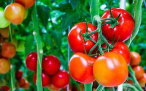 Hóa ra những trái cây chúng ta ăn thường ngày lại ẩn chứa nhiều điều thú vị
