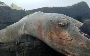 Sinh vật khổng lồ trông như quái vật thời tiền sử dạt vào bờ biển
