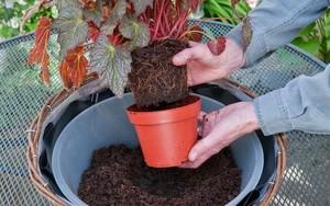 Cách giúp bạn tăng năng suất cây trồng cho khu vườn cực hiệu quả mà lại dễ làm