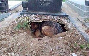 Ai cũng nghĩ con chó đau buồn vì người chủ quá cố cho đến khi phát hiện thứ bên dưới ngôi mộ