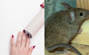 Đừng vội vứt đi, lõi giấy vệ sinh sẽ giúp bạn bẫy chuột vô cùng hiệu quả đấy