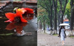 Những hình ảnh sẽ khiến bạn ngỡ ngàng thốt lên: Hóa ra Hà Nội vẫn thơ mộng, dịu dàng đến thế!