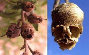 Những loài hoa hình dáng lạ kỳ mang vẻ đẹp khiến nhiều người sững sờ