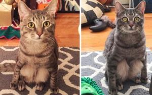 """Những con mèo """"tạo dáng"""" chuyên nghiệp như người"""