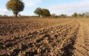 Cầm máy dò kim loại đi khắp cánh đồng, người đàn ông gặt hái được thành quả không tin nổi