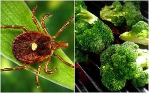 Chỉ cần một vết cắn của con bọ này bạn sẽ biến thành người ăn chay